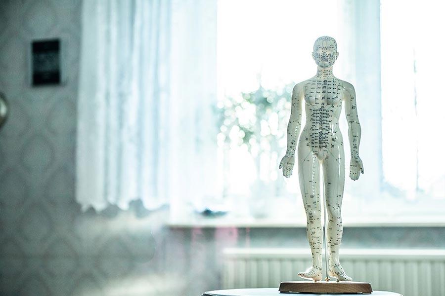 modellino del corpo umano, osteopatia