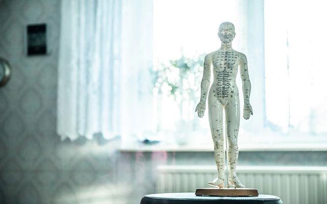 modellino corpo umano, osteopatia